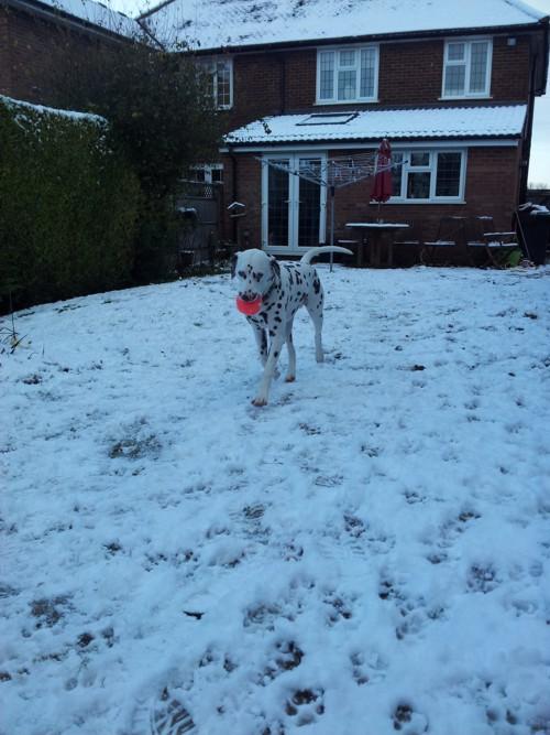 wiggins in snow