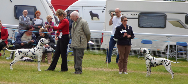 Drambuie and Chevalier at Welsh Kennel Club in August 2014